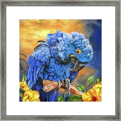 Hyacinth Macaw Framed Print by Carol Cavalaris