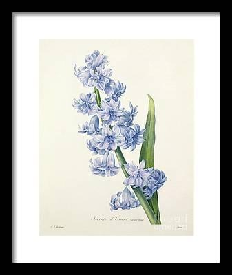Botanical Framed Prints