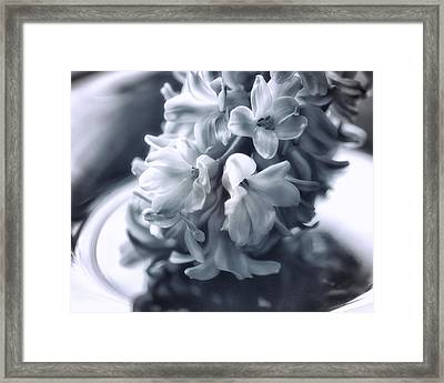 Hyacinth Plated Framed Print