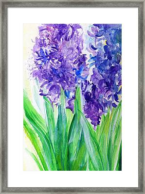 Hyacinths At Debbie's Framed Print by Rosanne Licciardi