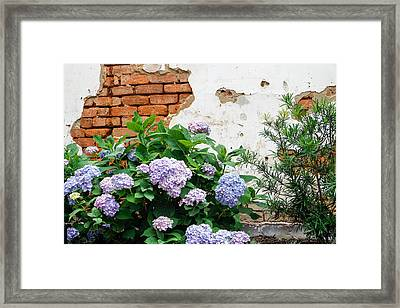 Hydrangea And Bricks Framed Print