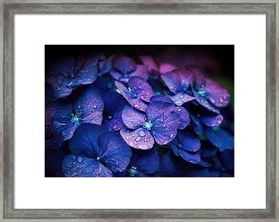 Hydrangea Framed Print by Elena E Giorgi
