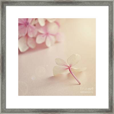 Framed Print featuring the photograph Hydrangea Flower by Lyn Randle