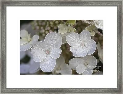 Hydrangea Fractalius Framed Print