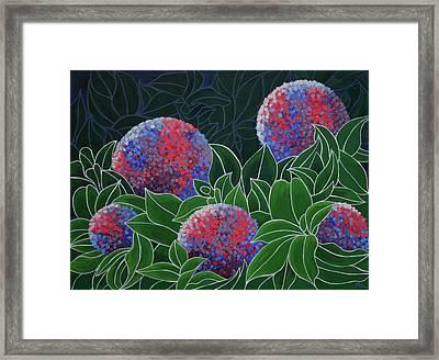 Hydrangea Grandiflora Framed Print