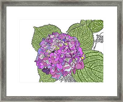 Hydrangea Framed Print by Jamie Downs