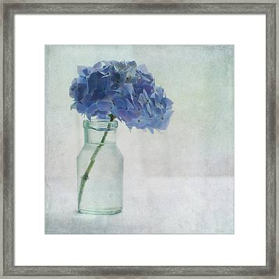 Hydrangea Framed Print by Jill Ferry