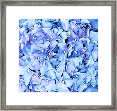 Framed Print featuring the photograph Hydrangea by Kristin Elmquist