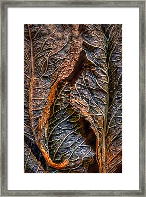 Hydrangea Leaves - Center Framed Print by Nikolyn McDonald