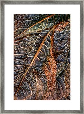 Hydrangea Leaves - Left Framed Print by Nikolyn McDonald