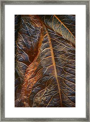 Hydrangea Leaves - Right Framed Print by Nikolyn McDonald