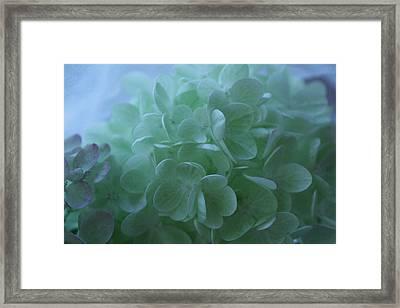 Hydrangea Repose Framed Print by Nancy TeWinkel Lauren