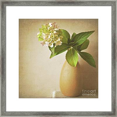 Hydrangea With Leaves Framed Print