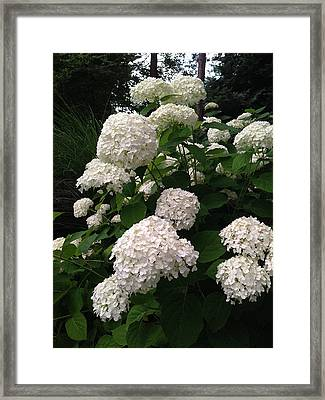 Framed Print featuring the photograph Hydrangeas by Ferrel Cordle
