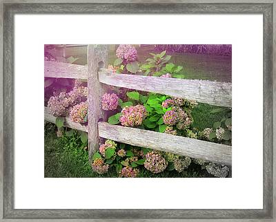 Hydrangeas Framed Print by JAMART Photography