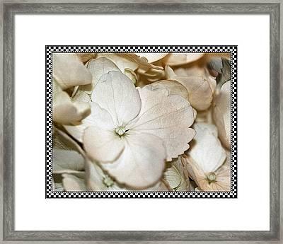 Hydrengea Blossom 3 Framed Framed Print