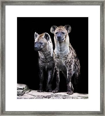 Hyena Lookout Framed Print