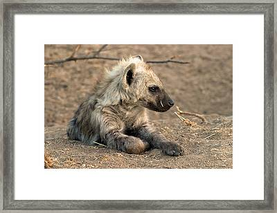 Framed Print featuring the photograph Hyena by Riana Van Staden