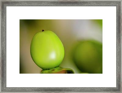 Hypericum Berry Framed Print by Steven Brodhecker
