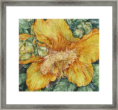 Hypericum Plant Framed Print