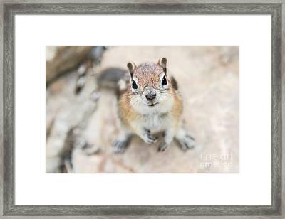 Hypno Squirrel Framed Print