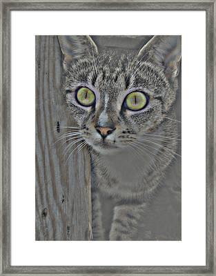 Hypnotize Framed Print by JAMART Photography