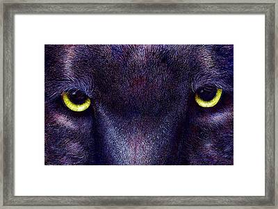Hyptnotist The Black Panther Framed Print by JoLyn Holladay