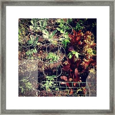 I Added Tomatoes And Pepper Plants To Framed Print