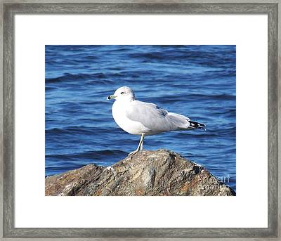 Framed Print featuring the photograph I Am A Rock Star - Photograph by Jackie Mueller-Jones