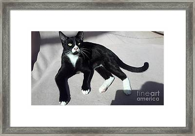 I Am Ceasar. Photo Of Black White Kitten Framed Print