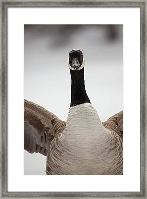 Framed Print featuring the photograph I Am Coming After You by Karol Livote
