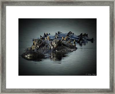 I Am Gator, No. 45 Framed Print