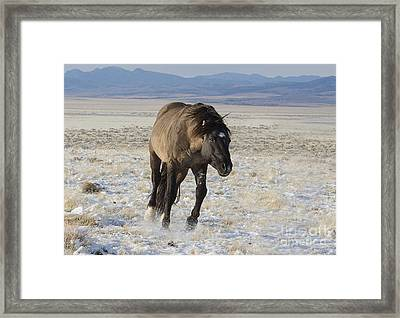I Am Going After Her Framed Print by Nicole Markmann Nelson