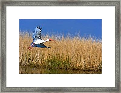 I Am Gone Framed Print