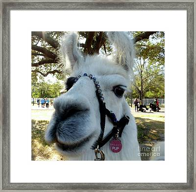 I Am Looking At You Framed Print