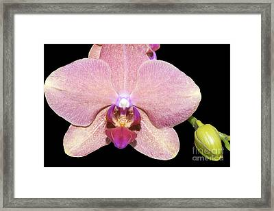 I Am Open Framed Print by Linda Troski