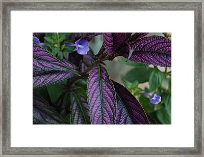 I Am Purple Framed Print