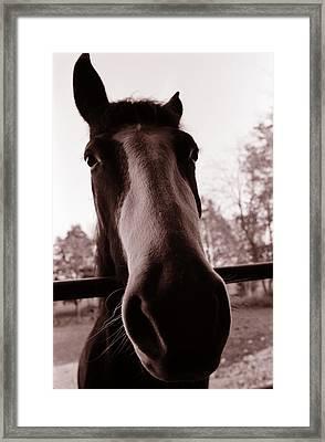 I Am Ready For My Closeup Framed Print by Katherine Huck Fernie Howard