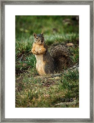 I Am So Cute Framed Print by Robert Bales
