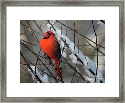A Song Of Joy Framed Print by Lois Bryan