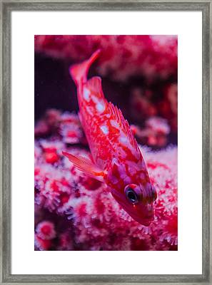 I Am Sooo Hot Pink Framed Print by Scott Campbell