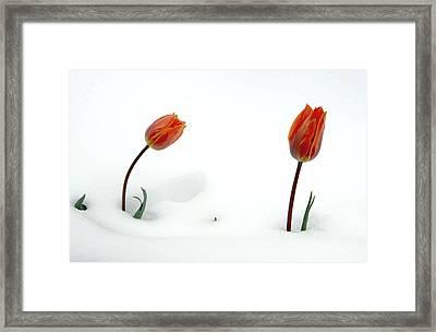 I Am Sorry Framed Print by James Steele