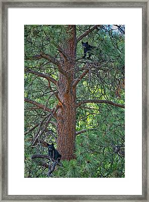 I Am The King Of The Castle Framed Print by Paul W Sharpe Aka Wizard of Wonders