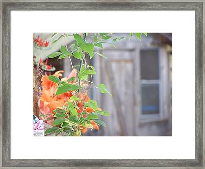 I Am The True Vine.. Framed Print by Laurie Kidd