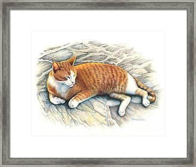 I Am Tiger Framed Print by Catherine Garneau