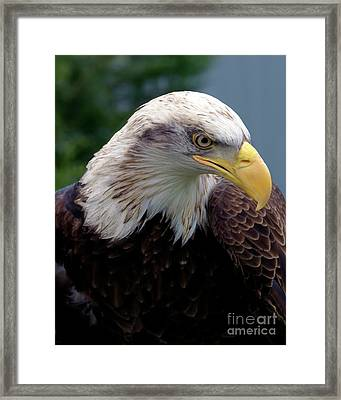 Lethal Weapon  Framed Print by Stephen Melia