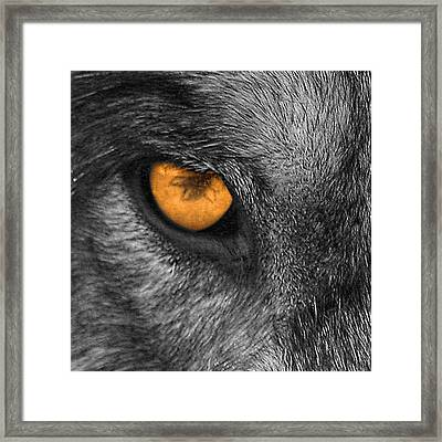 I Am Wolf Framed Print