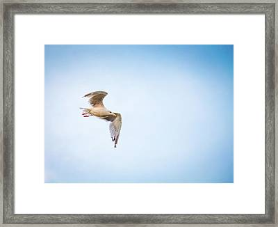 Framed Print featuring the photograph I Believe I Can Fly by Joel Witmeyer