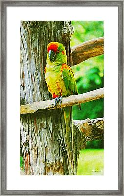I Blend Right In Framed Print