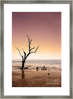 Framed Print featuring the photograph I Can Be Free by Dana DiPasquale